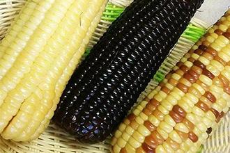速冻糯玉米与真空包装玉米的工艺流程