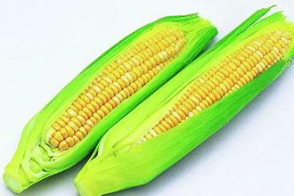 常温下如何保鲜嫩玉米呢?